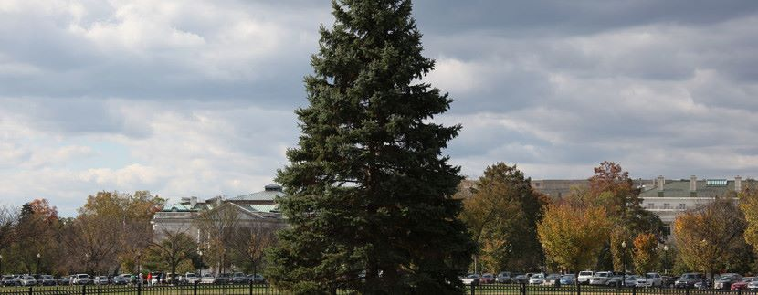 1280px-US_National_Christmas_Tree_-_looking_W_-_2012