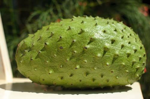 Guanaba-WHAT? The history and health benefits of the soursop