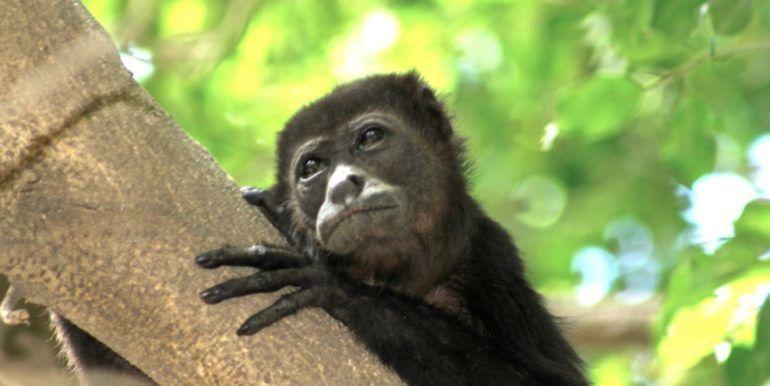 Monkey-PG