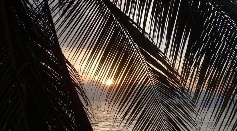 Playa Lagarto 38 palm leaves -min