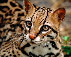 Costa Rica banned wildlife selfies