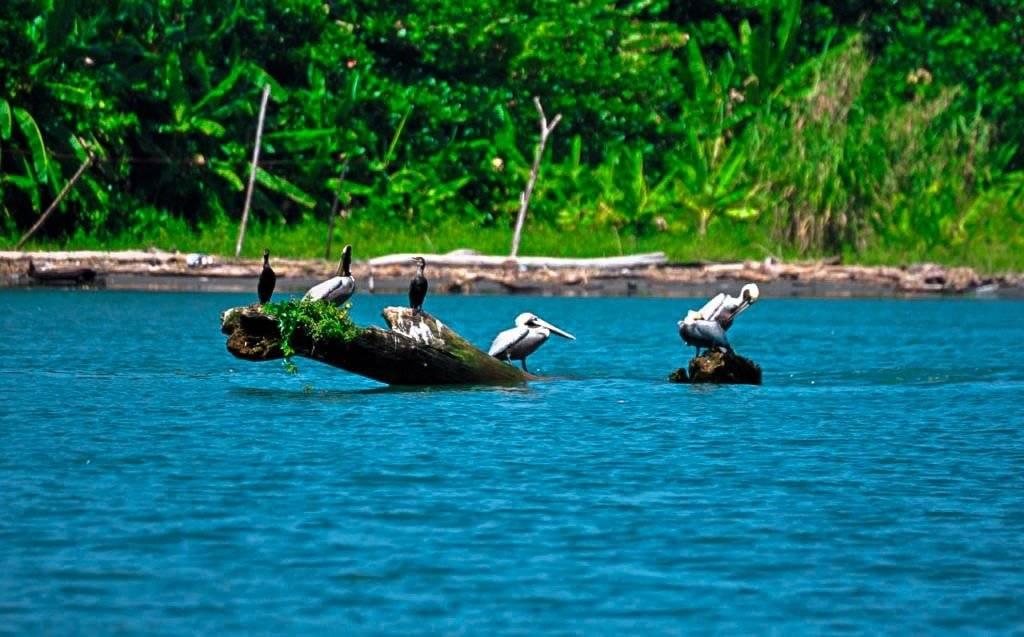 Costa Rica travel experiences mangrove tour