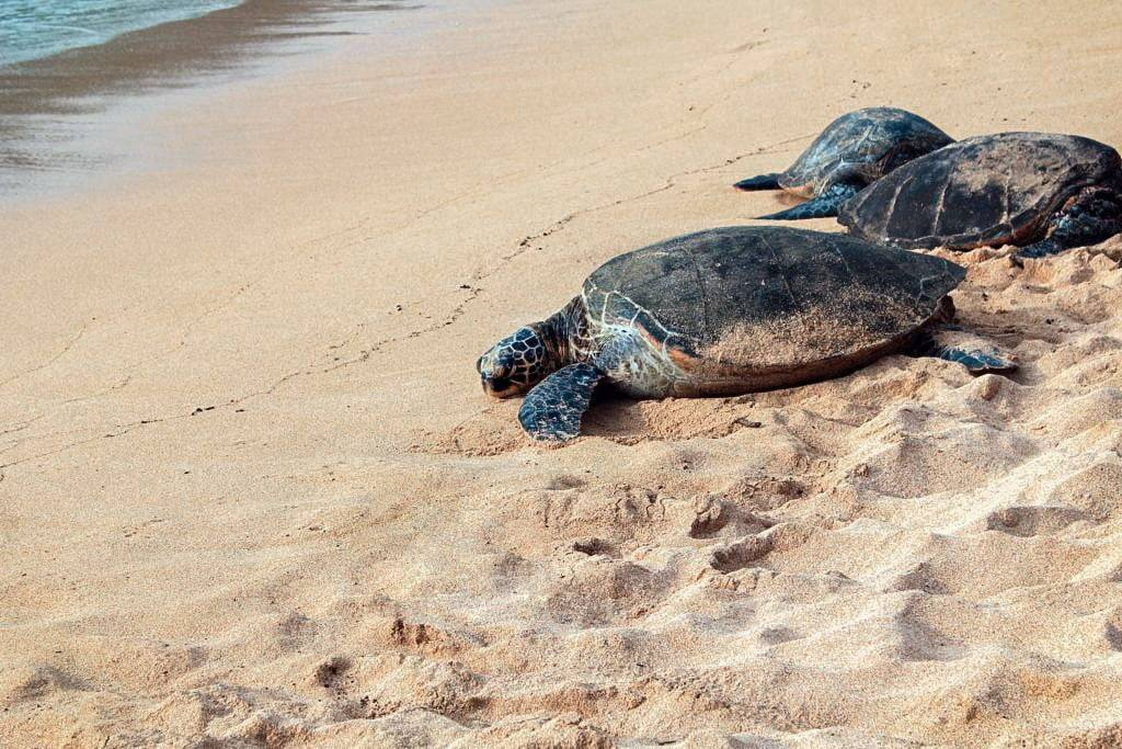 Costa Rica travel experiences sea turtle nesting hatching